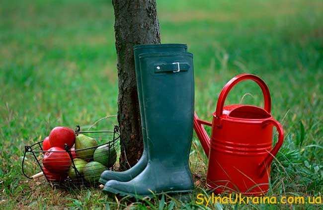 місячний посівний календар огородника на 2017 рік для України