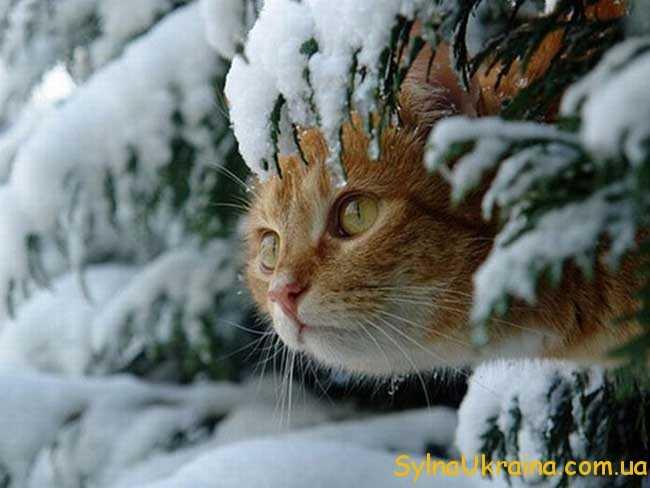 якою буде погода взимку 2017 року в Україні
