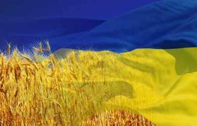 прапор і пшениця
