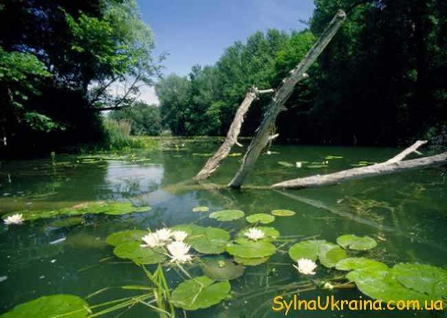 День водно-болотних угідь