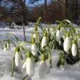 Березень – перший весняний місяць