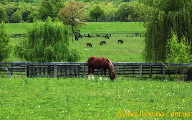 гірськи  ділянки , які призначені для випасу худоби