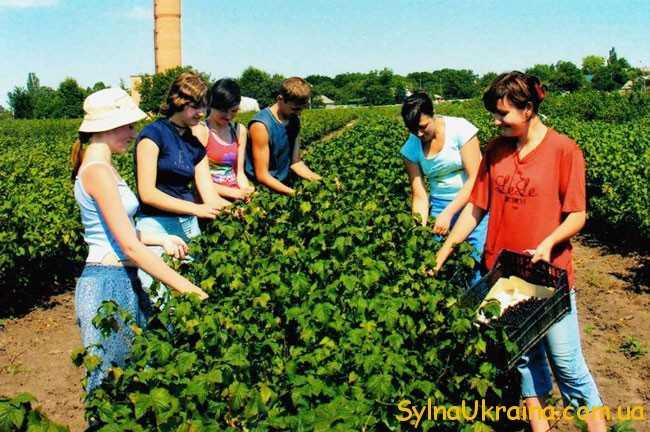 Робота в Польщі є дуже популярною серед багатьох українців