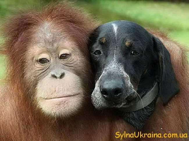 Непосидючі представники знаку Мавпи