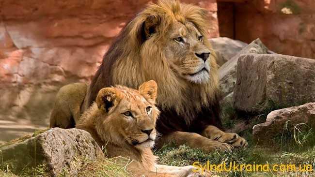 Що стосується Левів