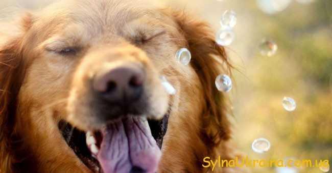 собака і крапельки води