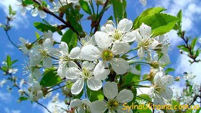 Справжня весна наступить в квітні