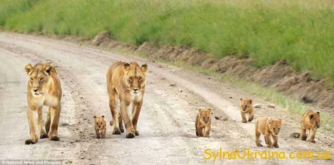 Леви – солідні, виважені