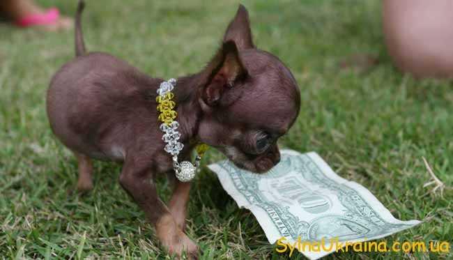 Гороскоп фінансовий на 2018 рік Собаки