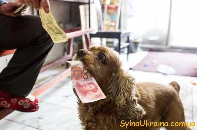 собачка и юани
