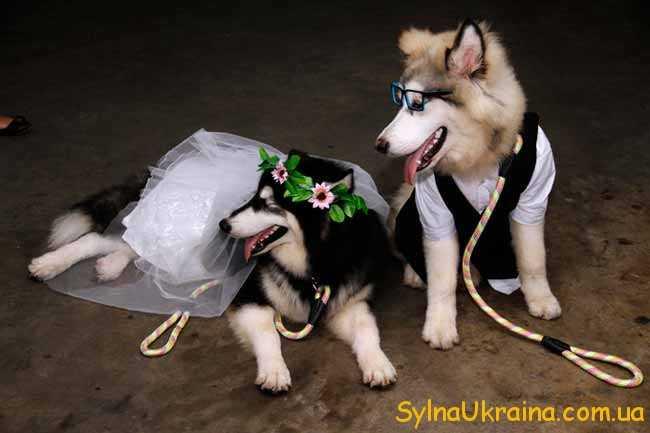 Весільний прогноз для Скорпіонів