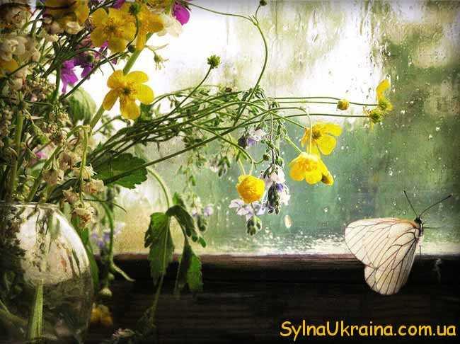 літній дощ