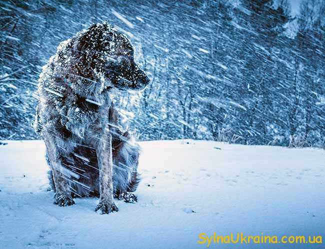 щедрі снігопади