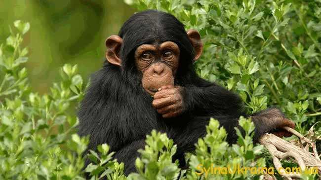 Гороскоп для Мавпи