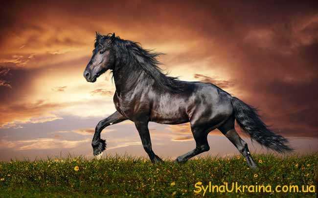 Гороскоп для Коня