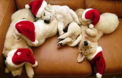 Цей рік буде під символом Жовтої Собаки