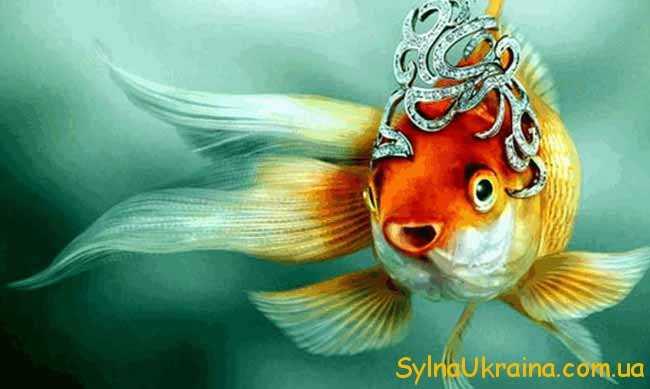 красива рибка