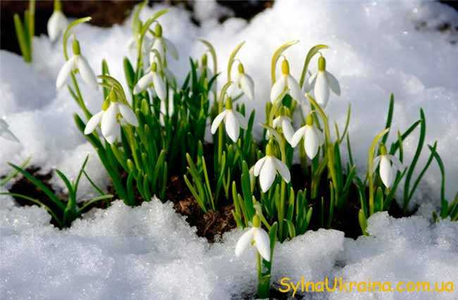 це весна...