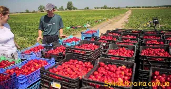 Як знайти вакансії роботи в Польщі