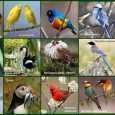 традиція як обрання птаха року