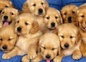 Володаркою нинішнього року є Жовта Земляна Собака
