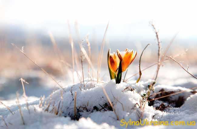 Погода на березень 2019 року в Україні