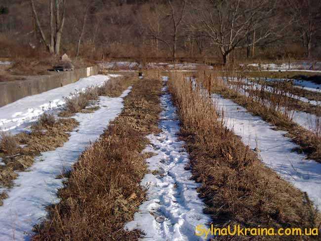 Садівництво та городні роботи березня