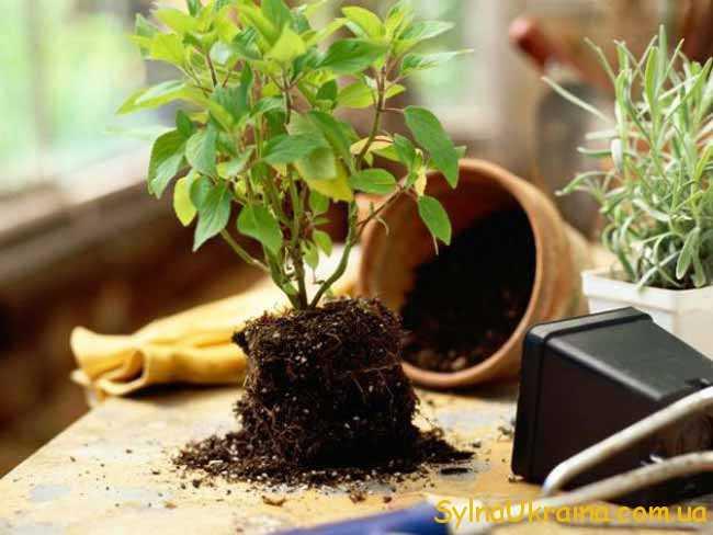 Усе, за що візьметься садівник, буде вдалим