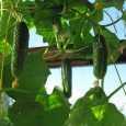 Використання сучасних агротехнологій