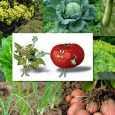 Можна висаджувати різні овочеві культури