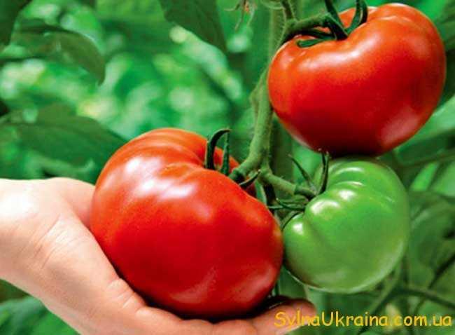 пасинкувати томати