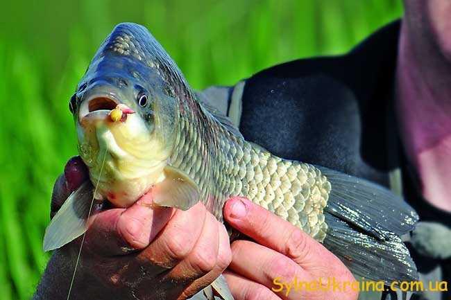 Час відправитись на риболовлю
