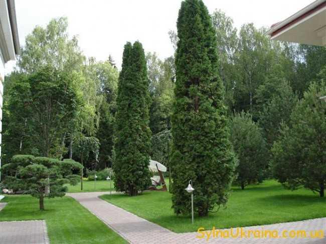 висаджувати та пересаджувати будь-які дерева та кущі