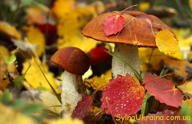 Листя лісових дерев яскравих гарячих кольорів